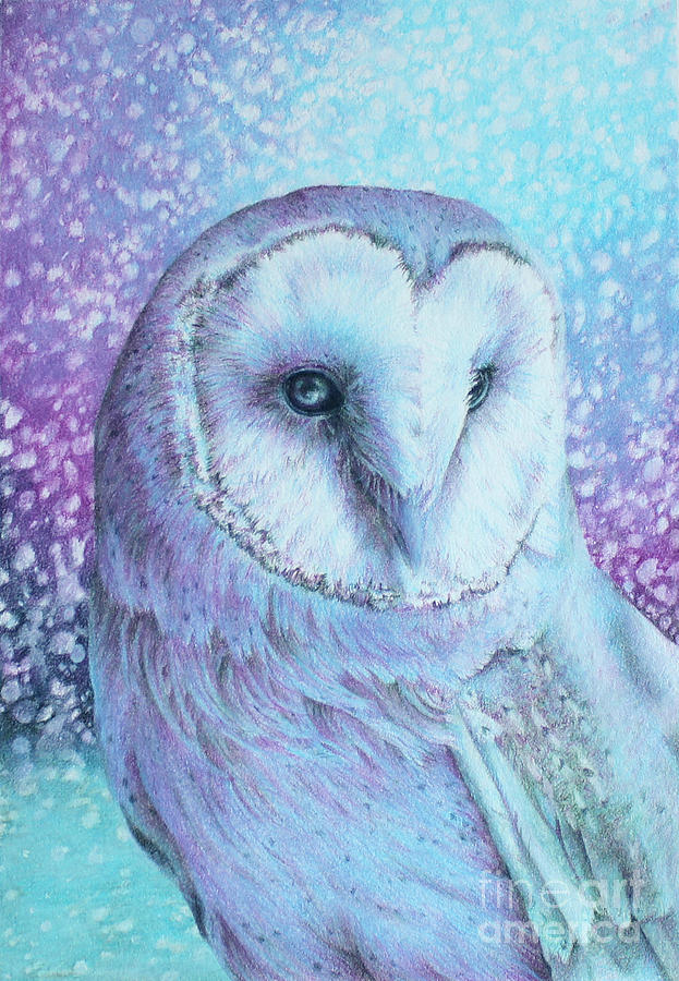 Drawing Drawing - Snowy Owl In Four Colors by Kay Walker