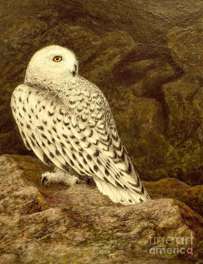 Snowy Owl Painting - Snowy Owl by Marc Dmytryshyn