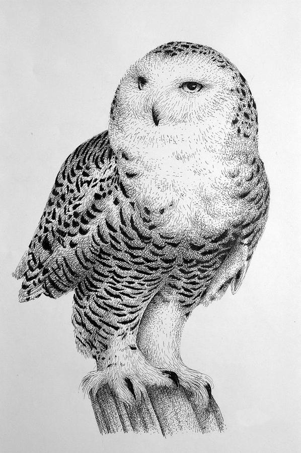 How To Draw A Realistic Snowy Owl