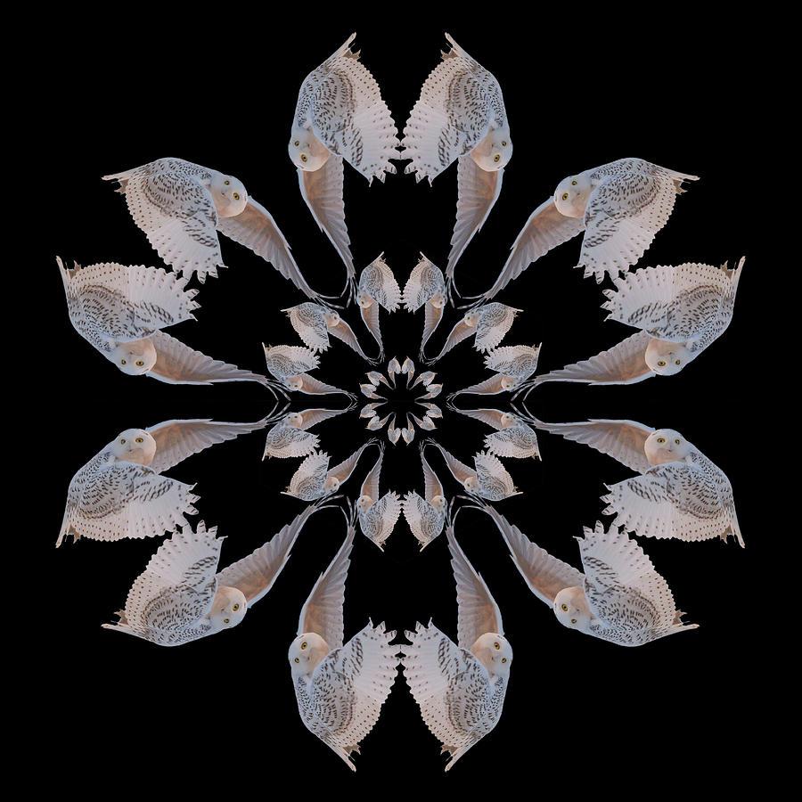 Kaleidoscope Photograph - Snowy Owl Snowflake by Rhoda Gerig