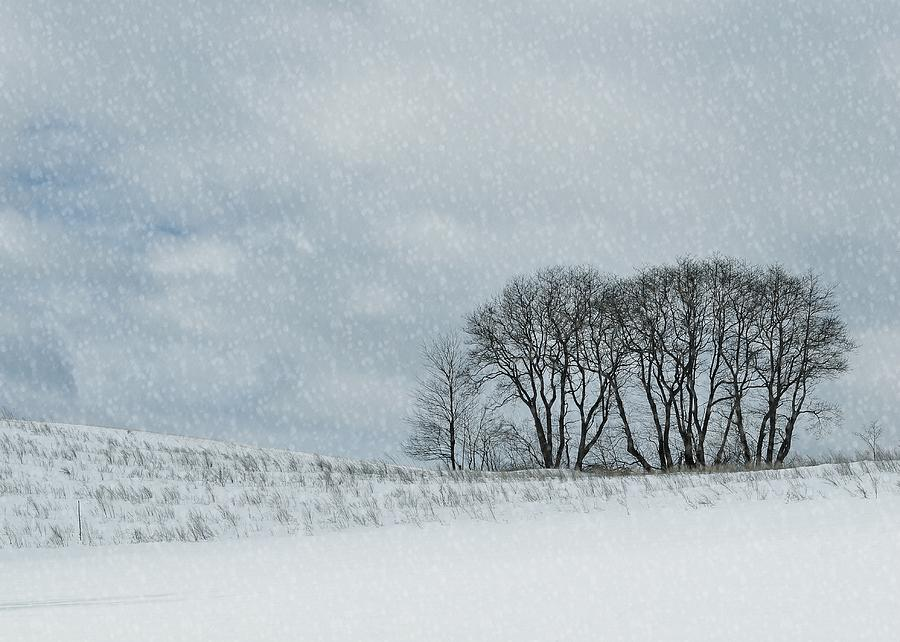 Snow Photograph - Snowy Pasture by JAMART Photography