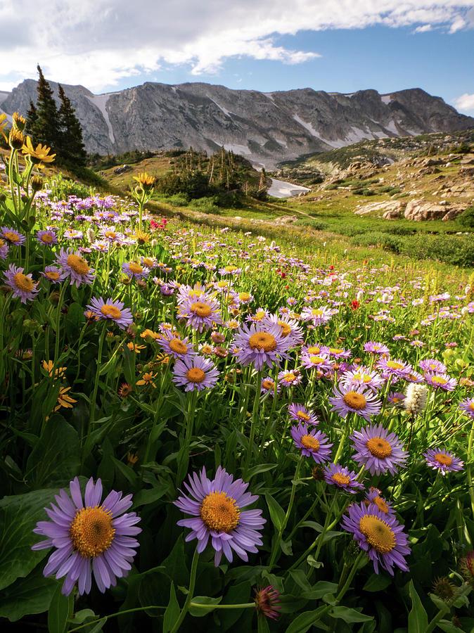 Snowy Range Flowers by Emily Dickey