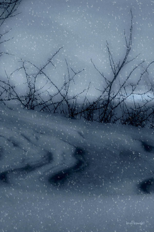 Snowy Tranquility Photograph