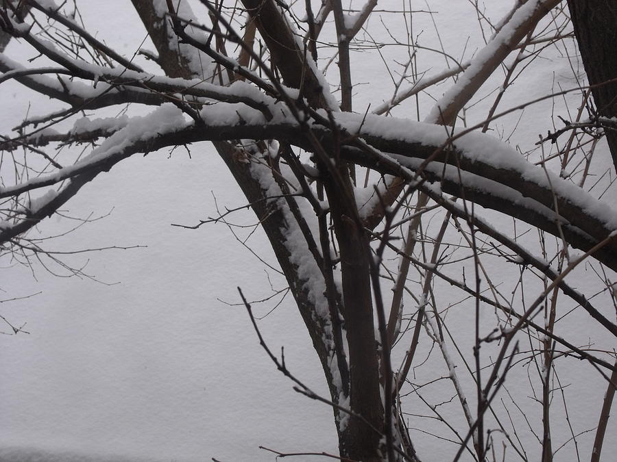 Abstract Photograph - Snowy Tree II by Anna Villarreal Garbis