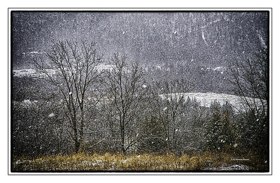 Snowy Trees Photograph by R Thomas Berner