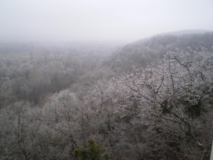 Snow Photograph - Snowy Trees by Sarah Ann Henderson