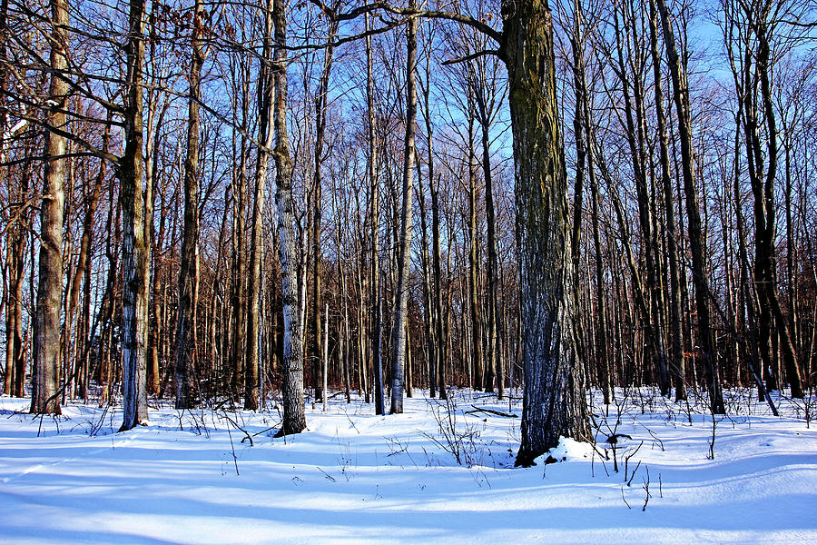 Snowy Woods Photograph By Debbie Oppermann