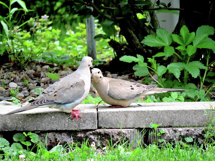 Birds Photograph - Snuggle  by Nancy Wagener