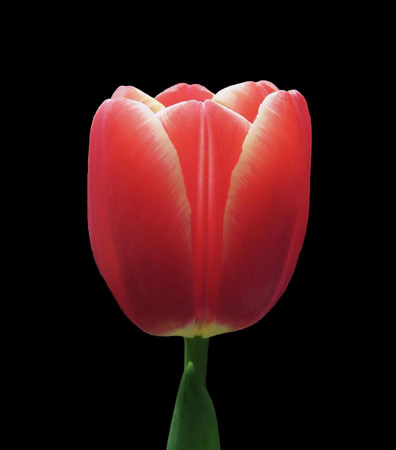 Red Photograph - So Beautiful by Johanna Hurmerinta
