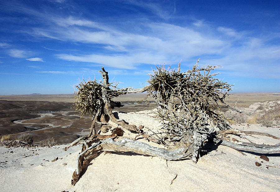 Landscape Photograph - So Dry by Mary Haber