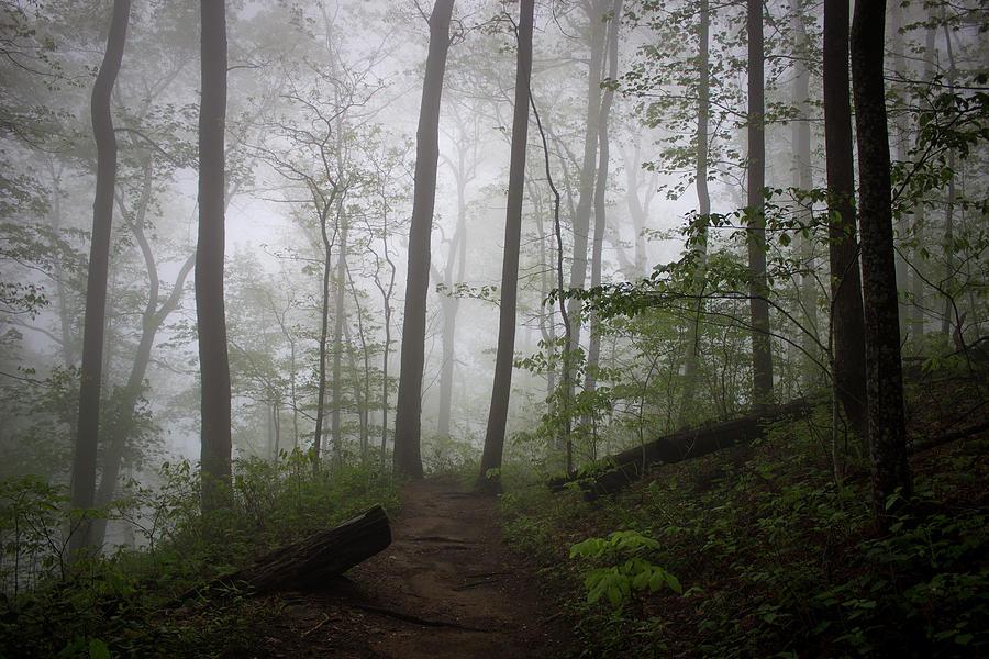 So Foggy by Ben Shields