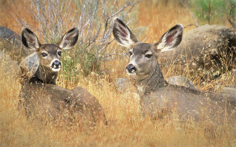 Deer Photograph - So Much For Your Secret Place... by Donna Kennedy