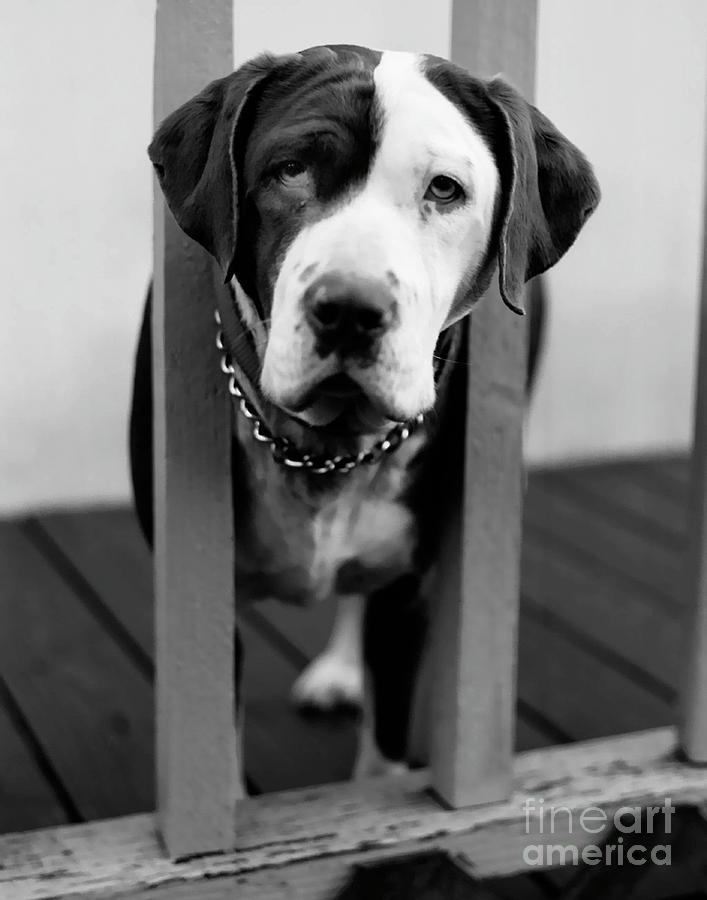Black And White Photograph - So Sad by Peter Piatt