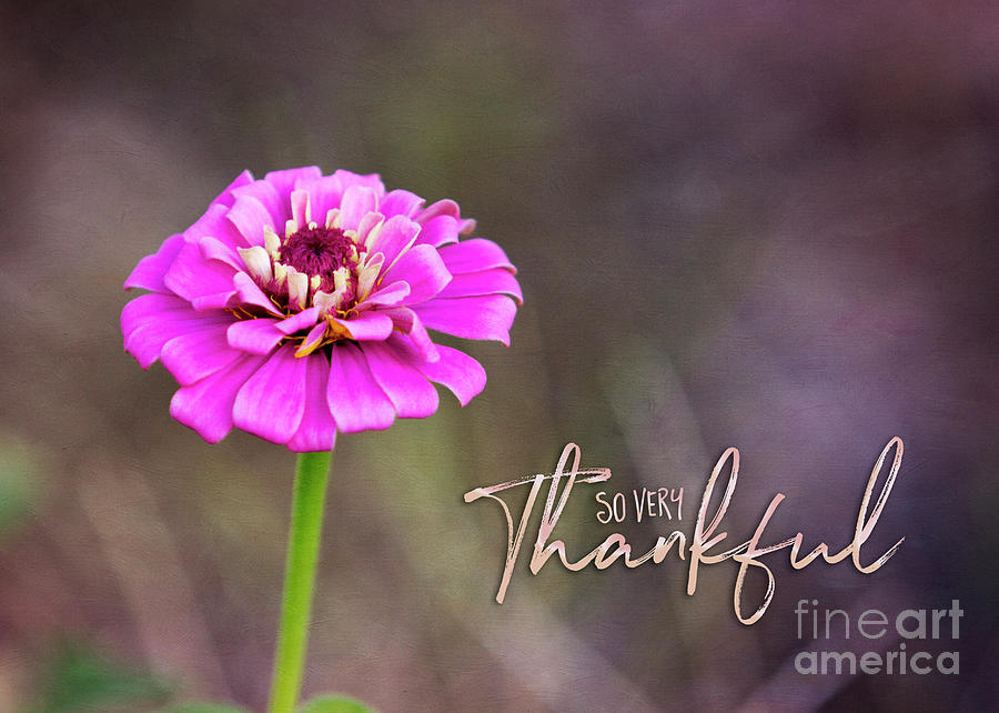 So Very Thankful by Mechala Matthews