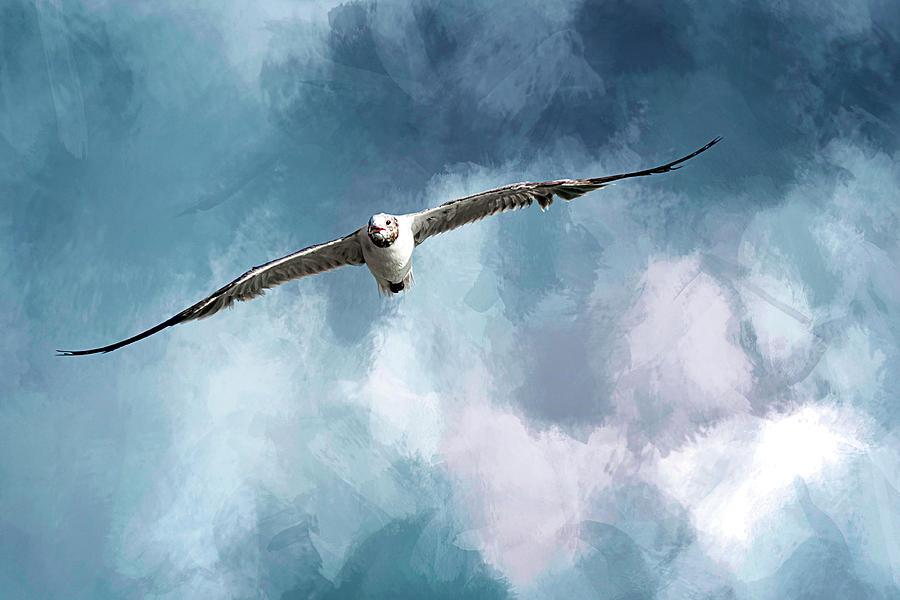 Seagull Photograph - Soaring by Cyndy Doty