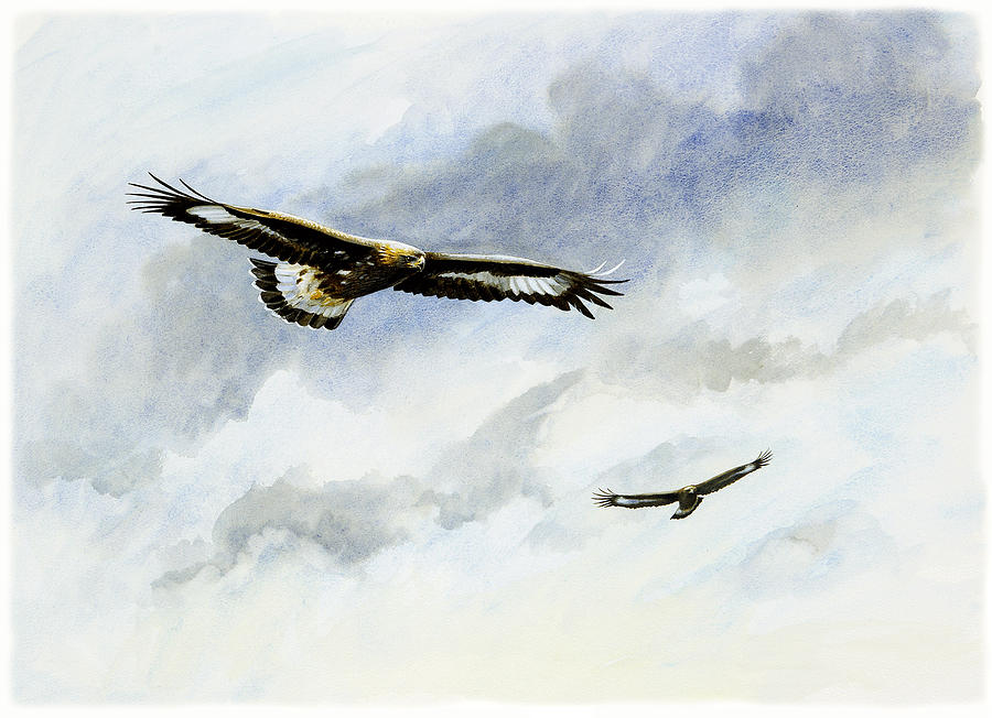 Soaring Golden Eagle Soaring Golden Eagles ...