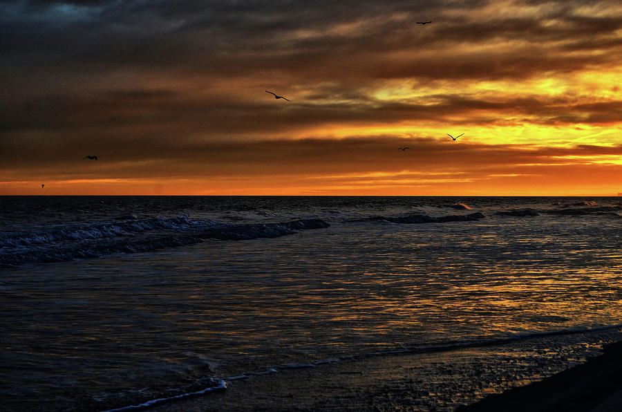 Atlantic Photograph - Soaring In The Sunset by Kelly Reber