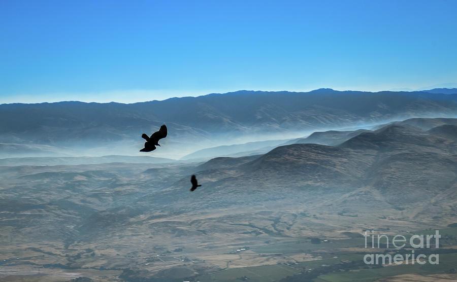 Raven Photograph - Soaring Ravens by Robert Bales