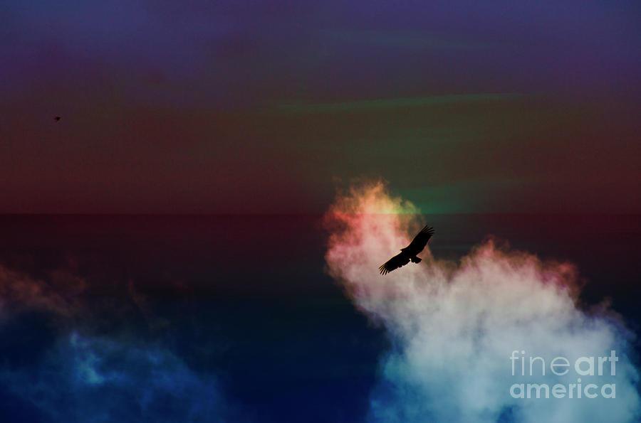 Buzzard Photograph - Soaring, Soaring by Al Bourassa