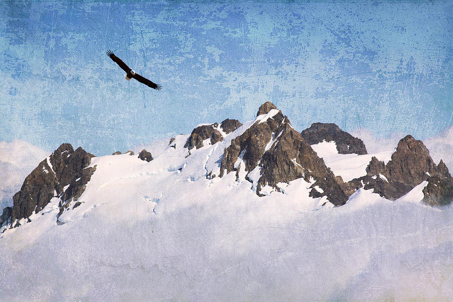 Eagle Photograph - Soaring The Peaks by Guy Crittenden