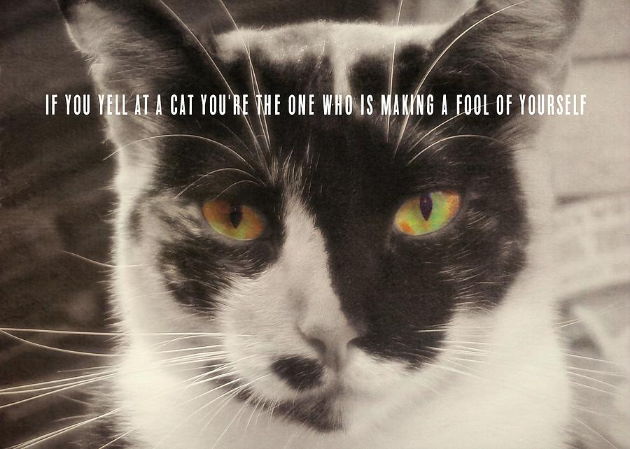 Cat Photograph - Socks Quote by JAMART Photography