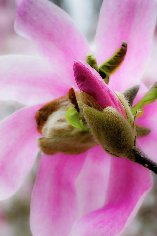 Soft Beauty by Carl Simmerman