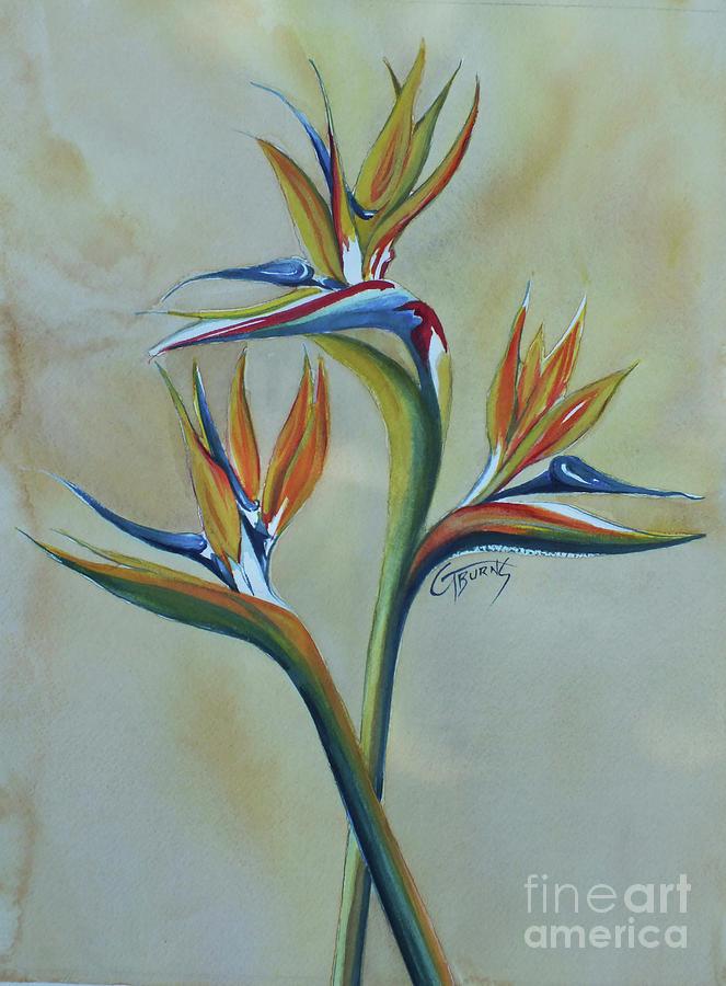 Soft Bird of Paradise by GG Burns
