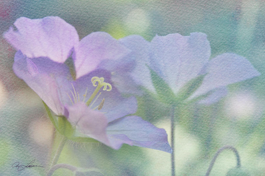 Soft Blue by Ann Lauwers