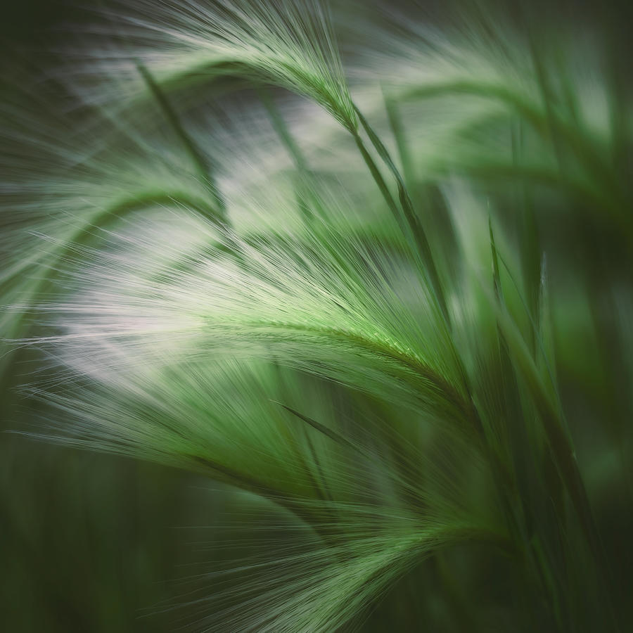 Soft Grass Photograph