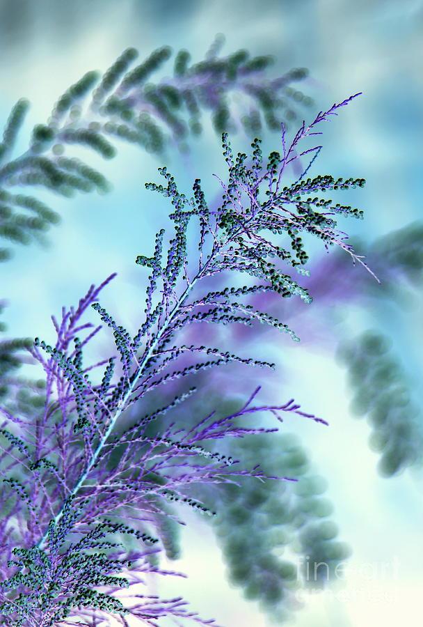 Inverted Colors Photograph - Soft Grasses by Carol Komassa