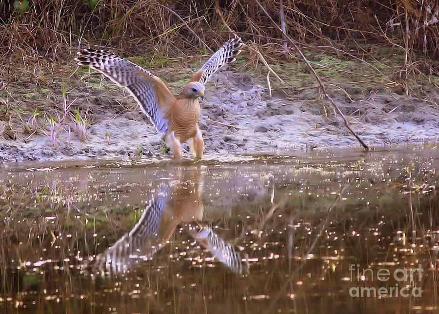 Nature Photograph - Soft Landing On The Pond by Carol Groenen