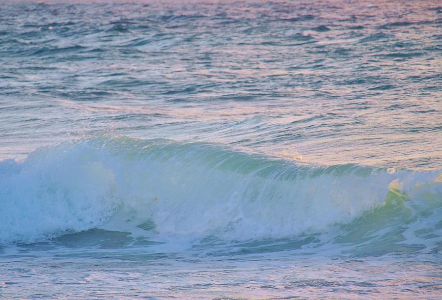 Alga Pyrography - Soft Oceans Breeze  by E Luiza Picciano