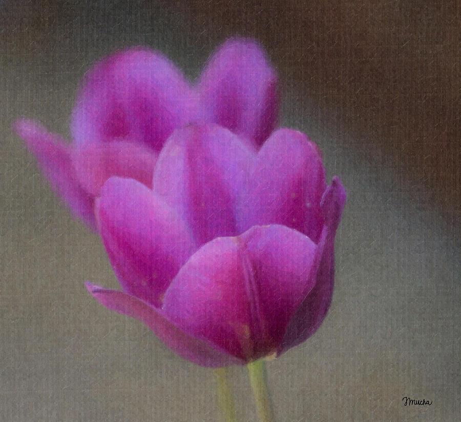 Tulip Photograph - Soft Pastel Purple Tulips  by Teresa Mucha