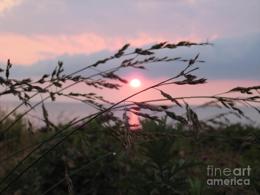 Soft Pastel Sunset with Wheat by Deborah A Andreas