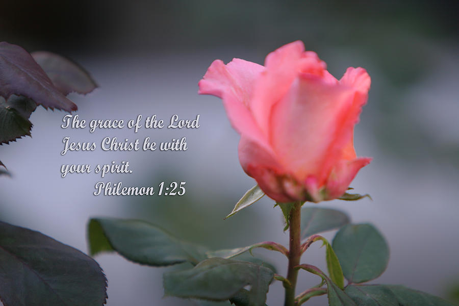 Scripture Photograph - Soft Pink Rose With Scripture by Linda Phelps