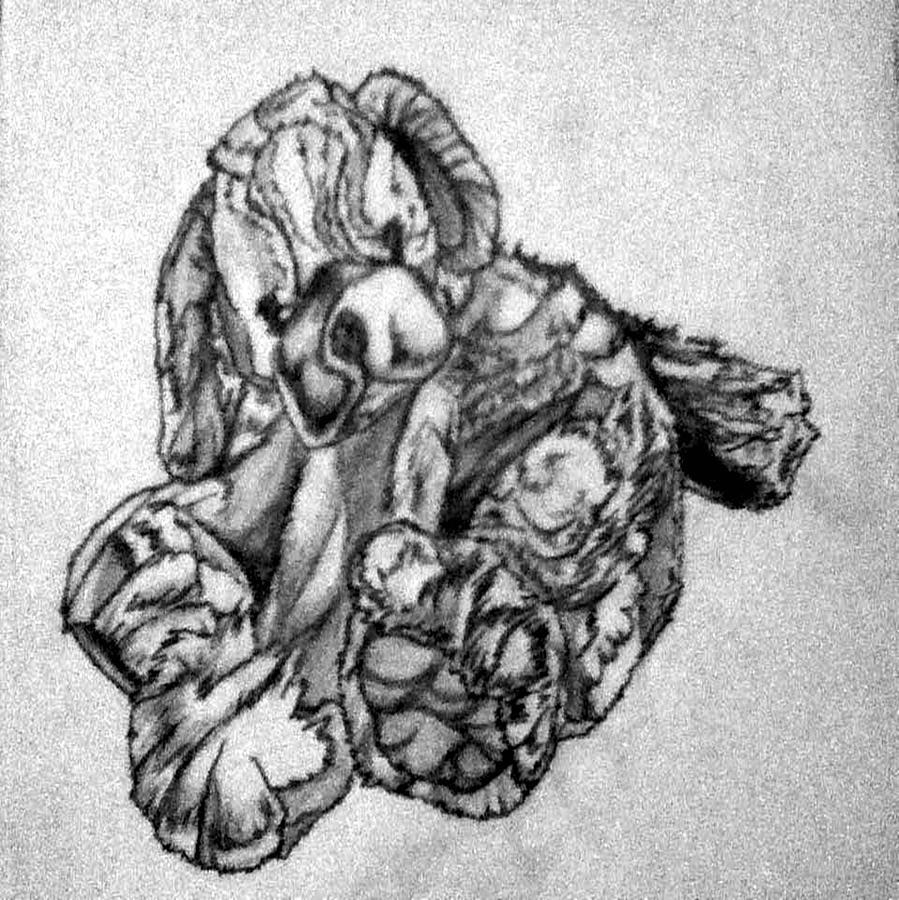 Artwork Drawing - Soft Puppy Sketch by Jayvon Thomas