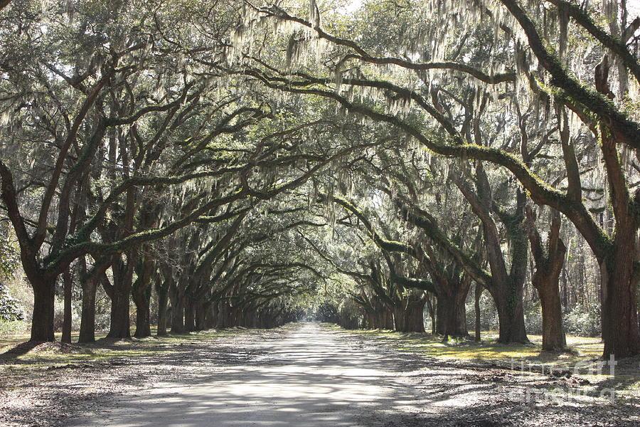 Live Oaks Photograph - Soft Southern Day by Carol Groenen