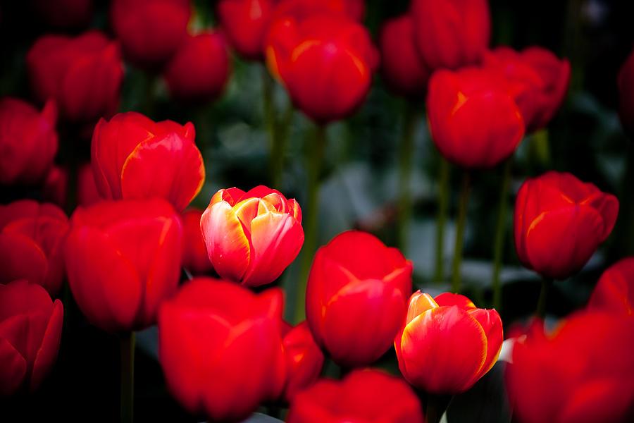 Flower Photograph - Soft Spotlight L572 by Yoshiki Nakamura