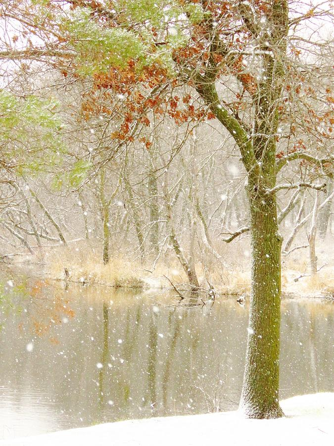 Creek Photograph - Softly Falls The Snow by Lori Frisch