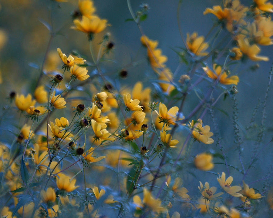 Softly Yellow and Blue Photograph by Ann Keisling