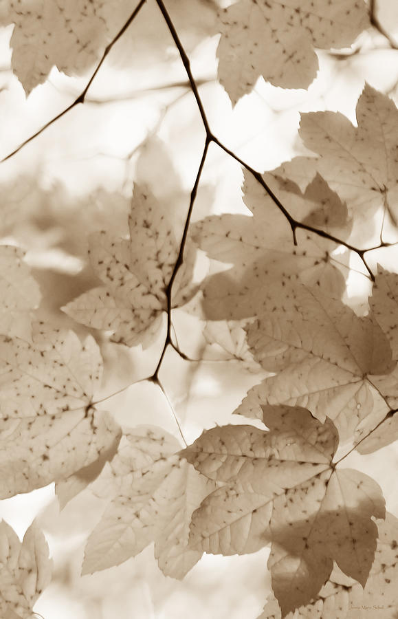 Leaf Photograph - Softness Of Brown Maple Leaves by Jennie Marie Schell