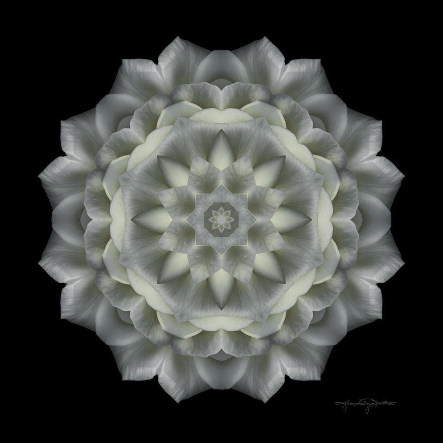 Flower Mandala Photograph - Softness Of Moonlight by Karen Casey-Smith