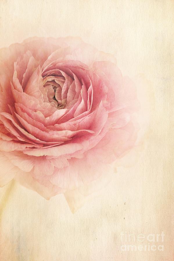 Buttercup Photograph - Sogno Romantico by Priska Wettstein