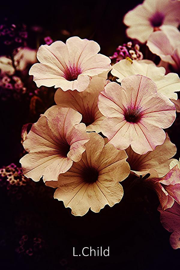 Botanical Photograph - Solanaceae by Lori Mahaffey