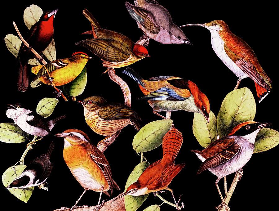 Solar Life Birds Digital Art