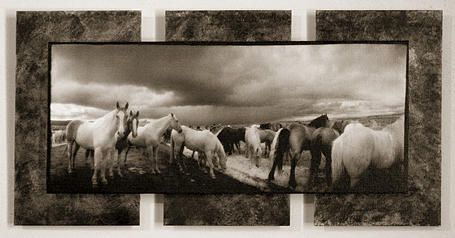 Horse Photograph - Sold- Two Horses Looking by Christine Hauber