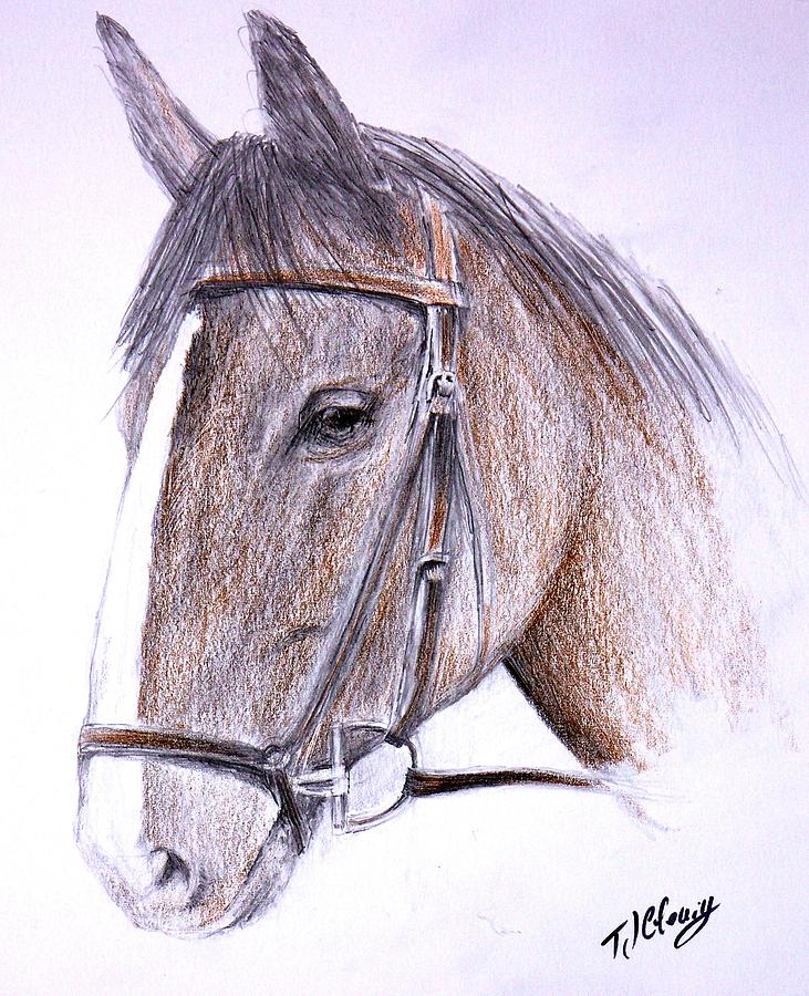 Horse Drawing - Solemn by Terence John Cleary
