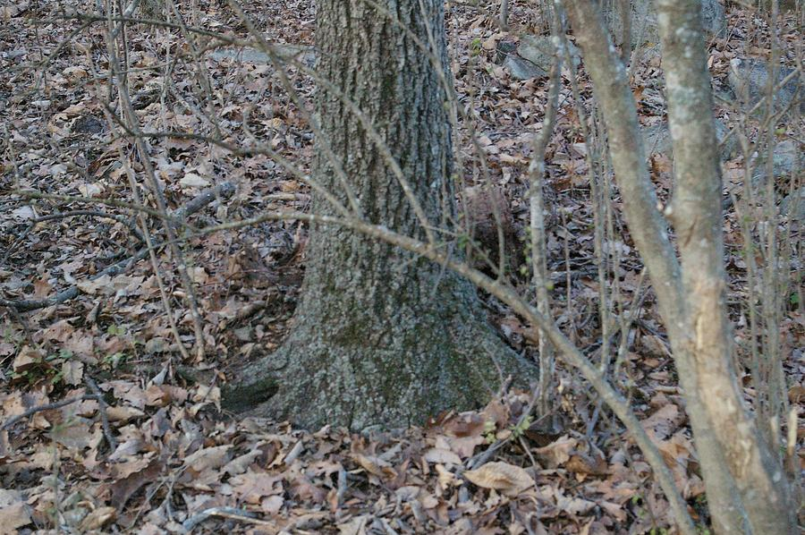 Trees Photograph - Solid Ground  by Jessica Pettit