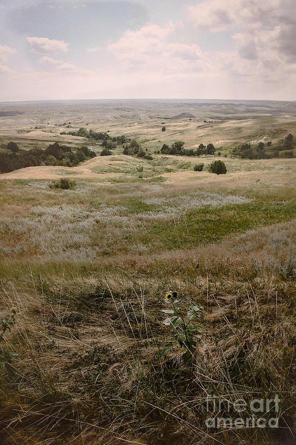 Landscape Photograph - Solitary Beauty by Sandy Adams