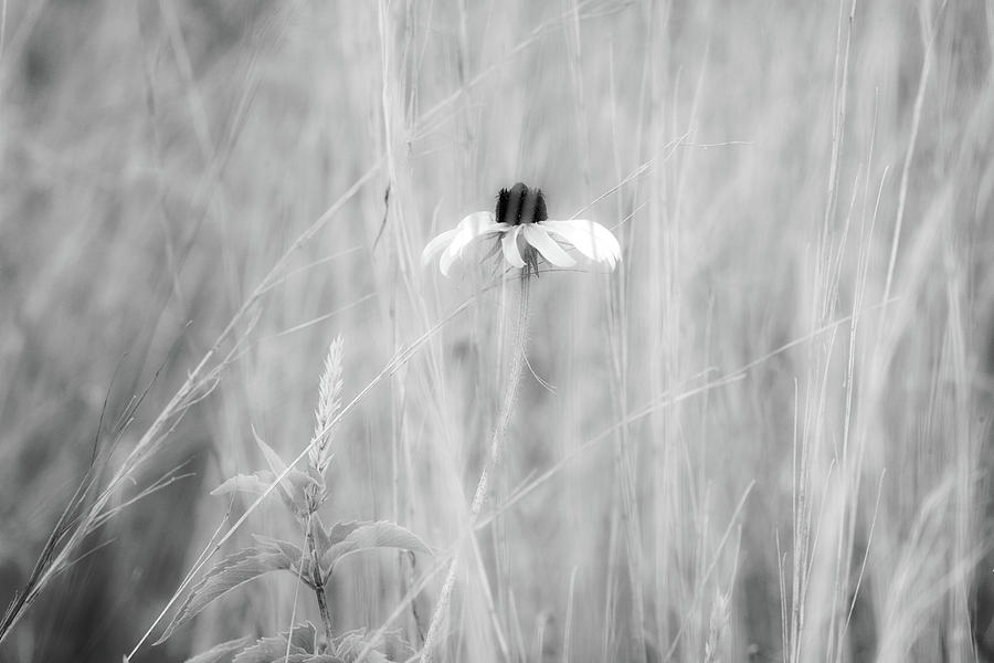 Solitary by Dawn J Benko